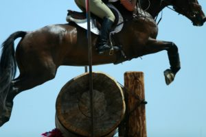 equestrian coaching services
